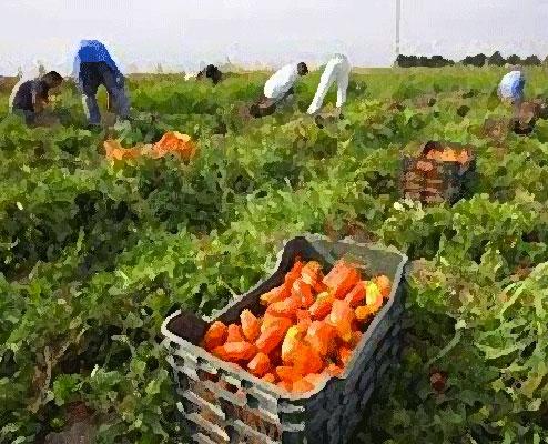 incontri agricoltori in Sudafrica incontri Warszawa