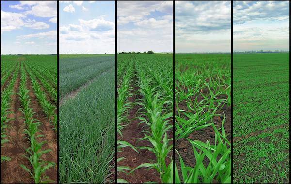 agricoltori sito di incontri Sud Africa